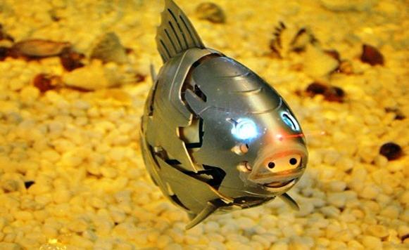Peces robot que lanzan rayos lazers cassette blog for Construccion de tanques para peces