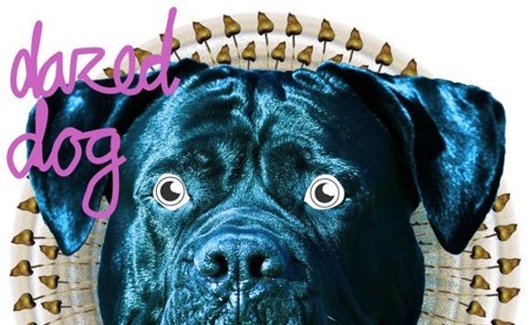 Dazed Dog - Musical nomad EP